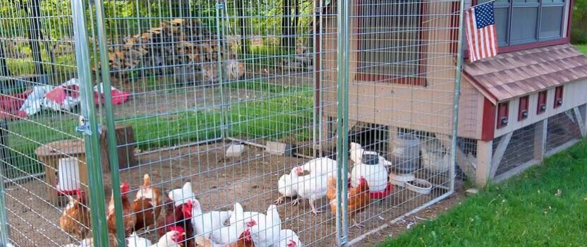 How to Use a Micro Linear Actuator to Automate a Chicken Coop Door