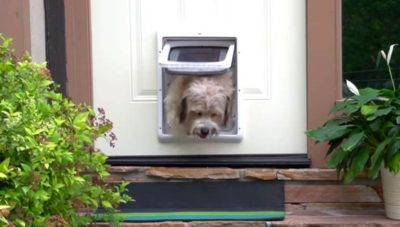 Home Automation Hacks for Mother's Day: Automated Pet Door